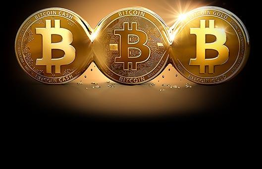 Best Bitcoin Beginners Guide Free : fattorialeginestre.it: App e Giochi